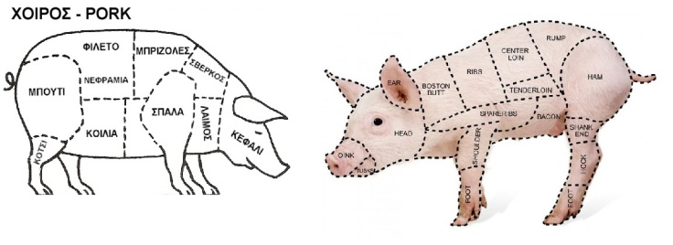 porc-anatomy