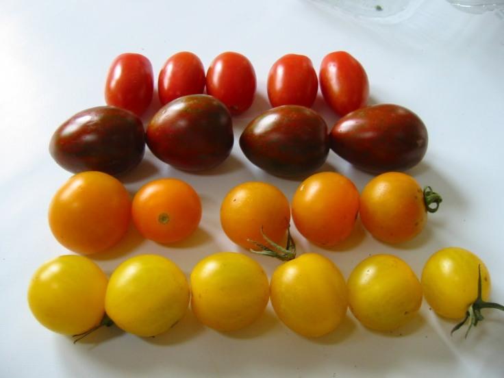 tomat;inia